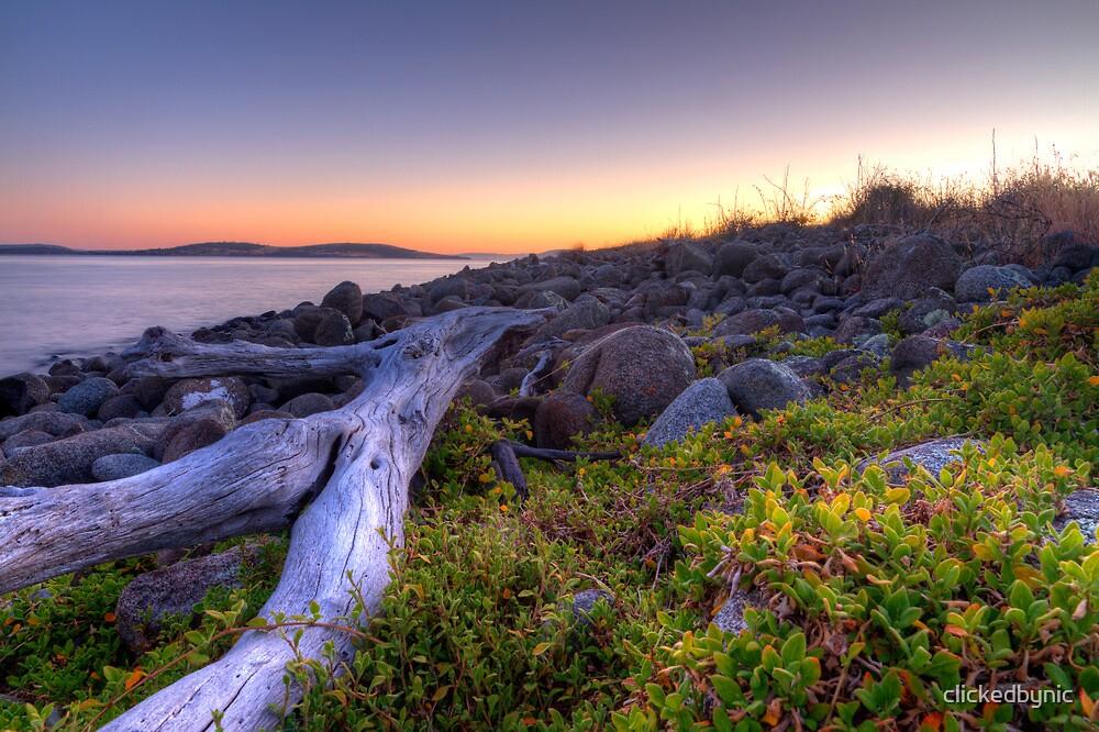 Driftwood Dawn - Bruny Island, Tasmania by clickedbynic