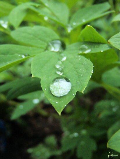 Water on leaf  by DrewK
