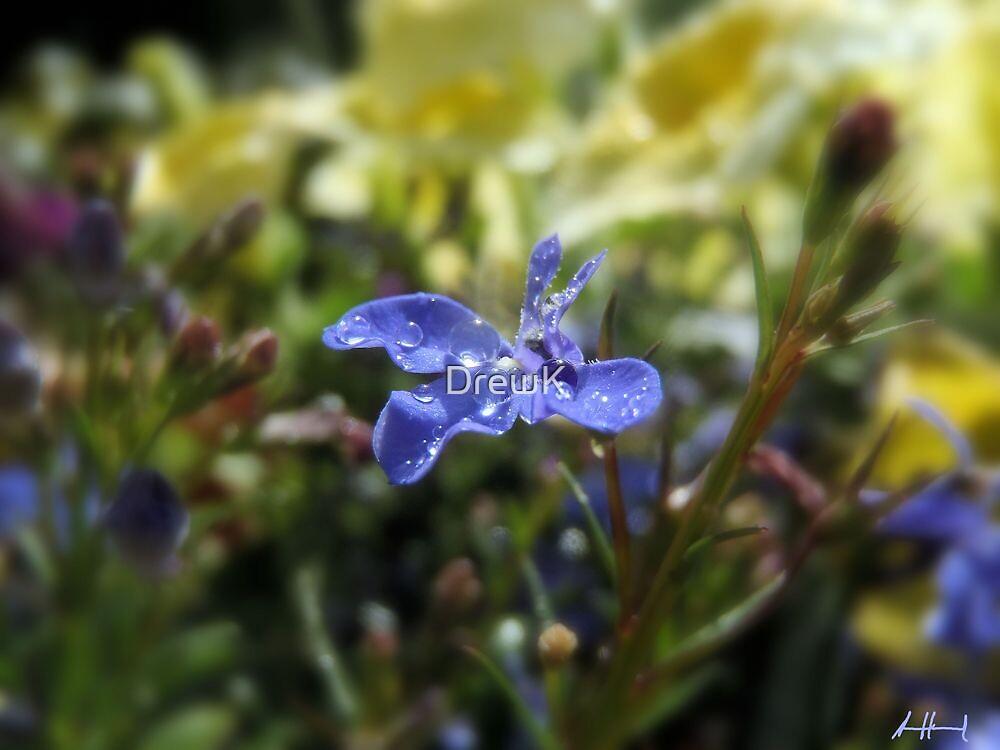 Purple flower by DrewK