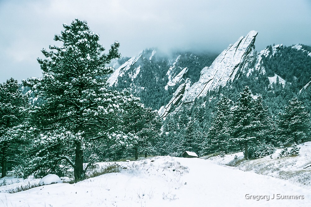 Bluebell Road And The Flatirons by Gregory J Summers
