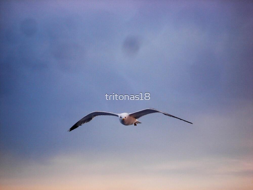 Seagulls! by tritonas18