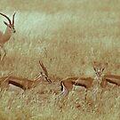 Antilopes in Serengeti National Park by Alina Uritskaya