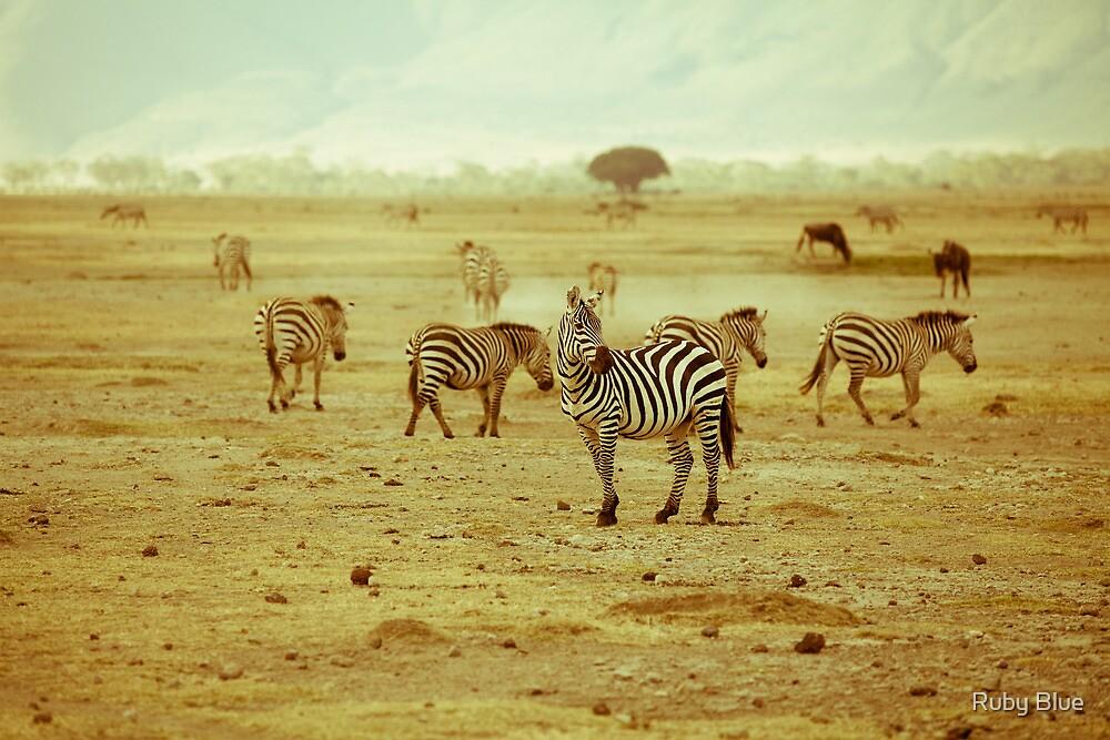 Zebras in Serengeti National park by Alina Uritskaya
