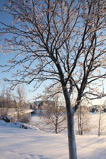 Winter Wonderland by MistyIslet