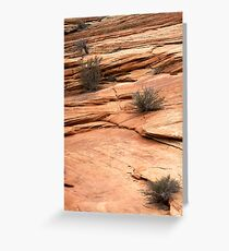 rocks and plants Greeting Card