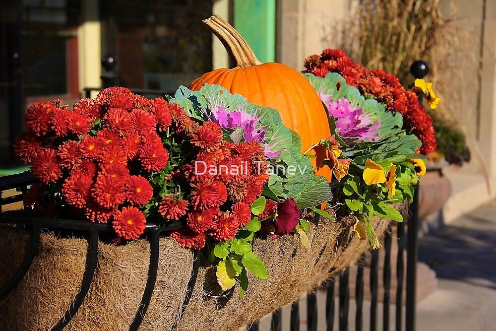 Autumn feel by Danail Tanev