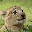 Lion Cub by knelliec