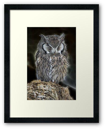 Sleeping Owl Beauty by Mariola Bitner