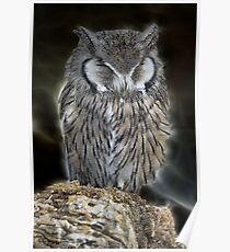 Sleeping Owl Beauty Poster