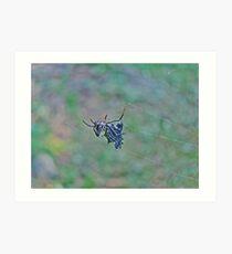 Spined Micrathena Orb Weaver Spider - Micrathena gracilis Art Print