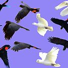 Birds in flight by mickmci