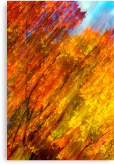 Fall burning 2012 by Joseph Rotindo
