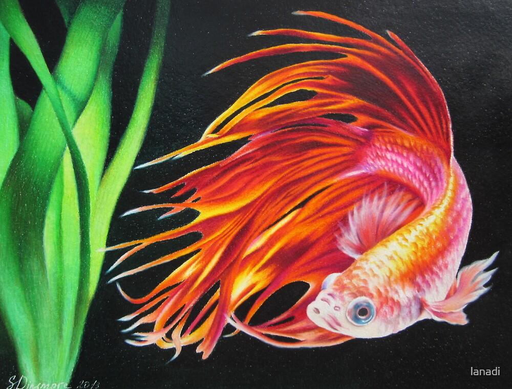 Betta fish by lanadi