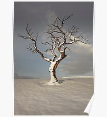 Standing In Snow Poster