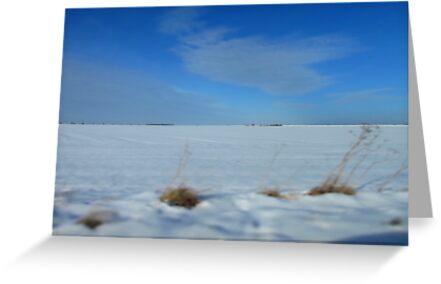 Winter Wonderland by Rachel Tyrrell