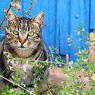 A cat in Vaison-la-Romaine by Harald Walker