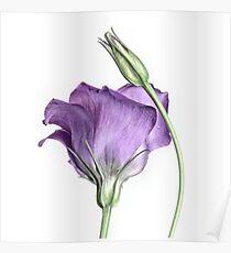 Purple Princess... Poster