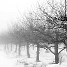 Apple Trees in Winter by Mary Ann Reilly