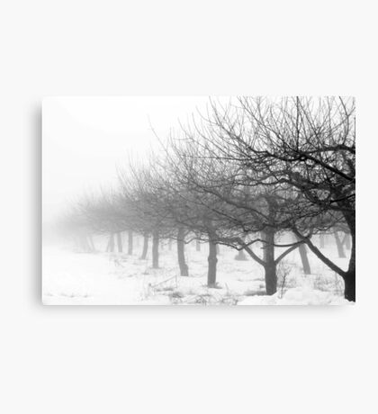 Apple Trees in Winter Canvas Print
