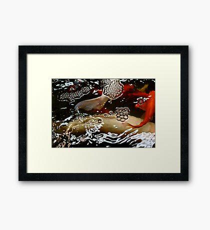 Abstract - Koi  Framed Print