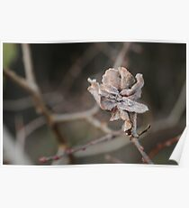 Willow Cabbage Gall, Landscape Poster