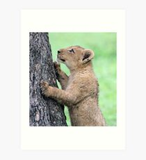 I think i can climb this tree!! Art Print