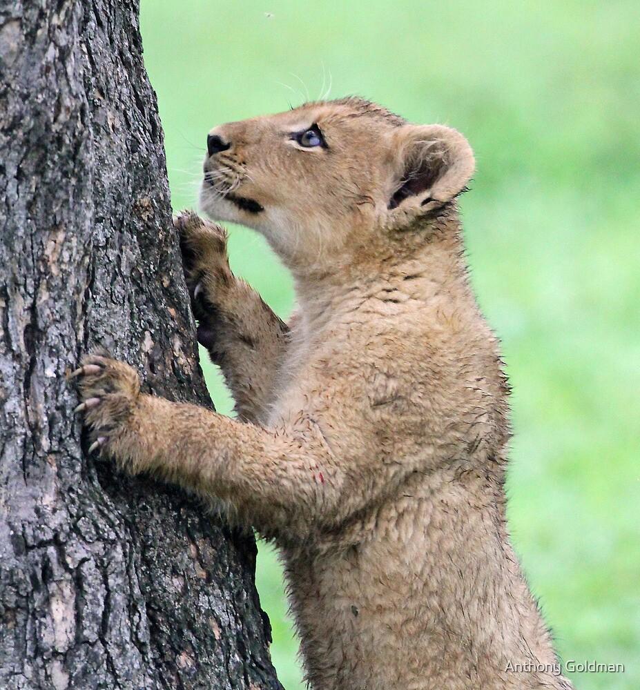 I think i can climb this tree!! by jozi1