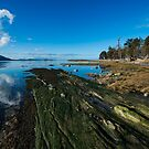 Cabbage Island Marine Park: Afternoon in January by toby snelgrove  IPA