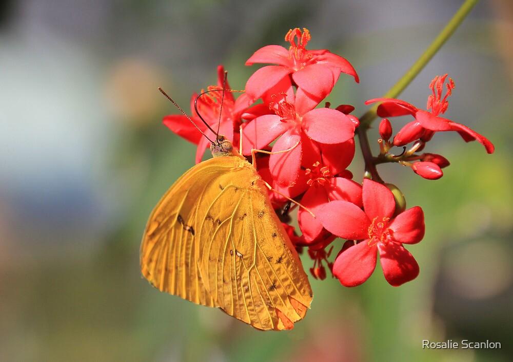Little Yellow Butterfly by Rosalie Scanlon