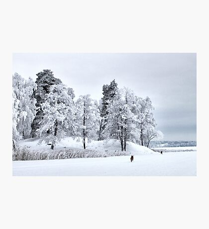 Frosted freedom Photographic Print