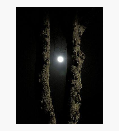 Moonlight: Framed Photographic Print