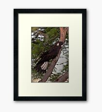 Afternoon Visitor Framed Print