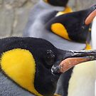 Emperor Penguins by Hannah Sterry