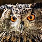 Eagle Eyes by hebrideslight