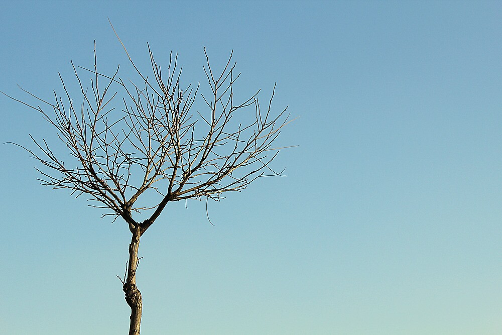 Lonely Tree by volkandalyan