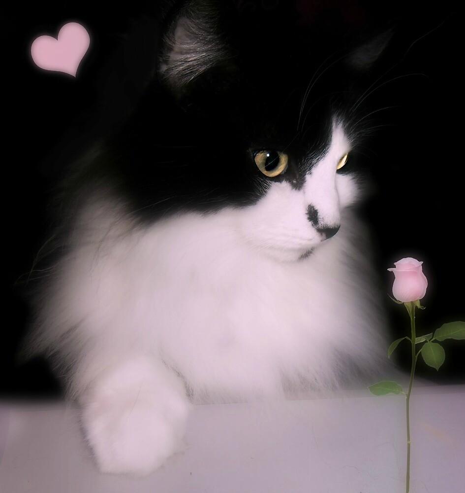 Pretty kitty by vic321