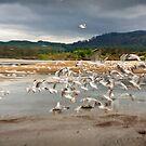 Taking flight, Lake Rotorua by Dilshara Hill