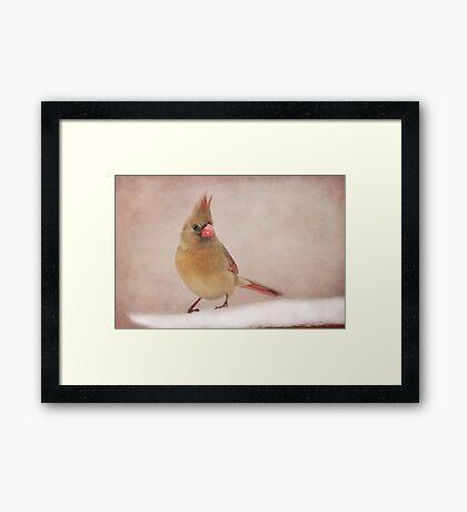 Mrs. Cardinal's Bad Hair Day ~ Framed Print