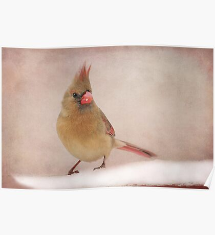 Mrs. Cardinal's Bad Hair Day ~ Poster