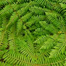 Ferns by Dilshara Hill