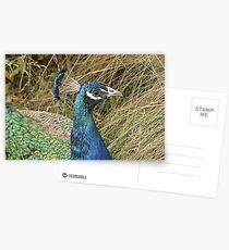 ~Peacock~ Postcards