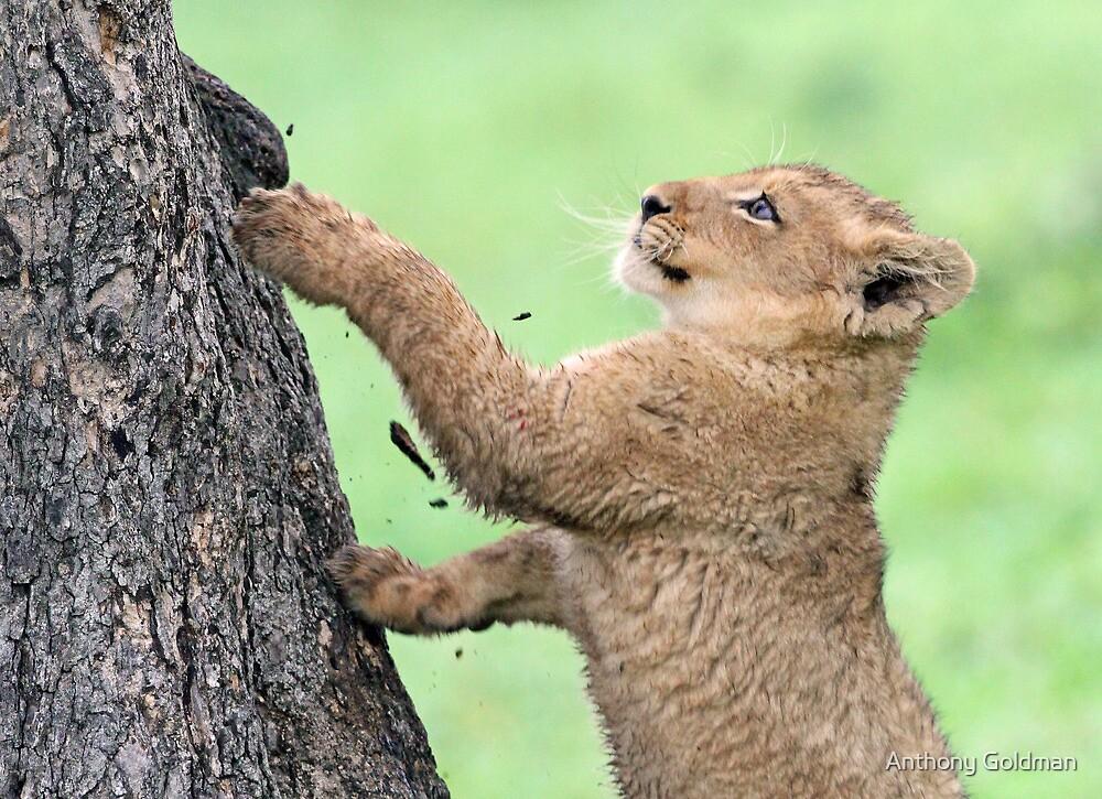 I don`t think i can climb this tree!! by Anthony Goldman