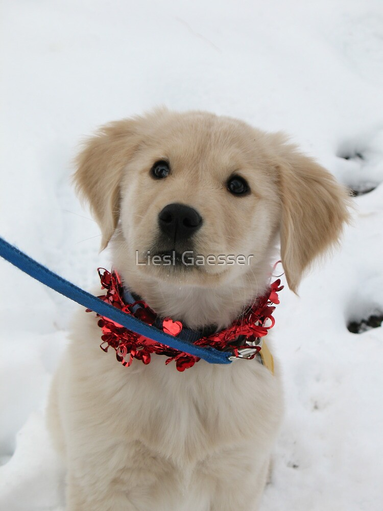 Puppy Love by Liesl Gaesser