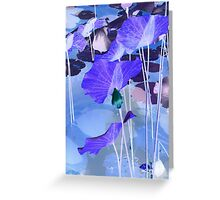 Water lilies_purple Greeting Card