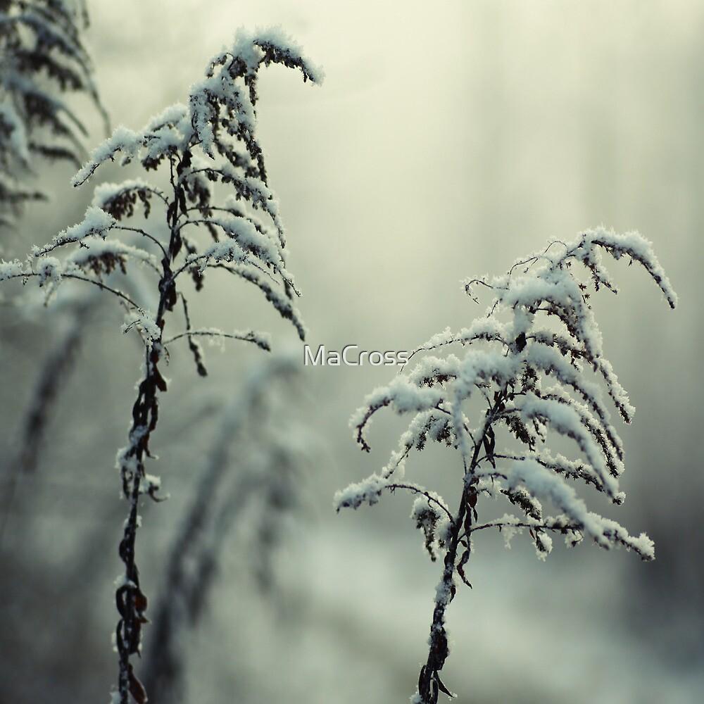 Winter by Martina Cross