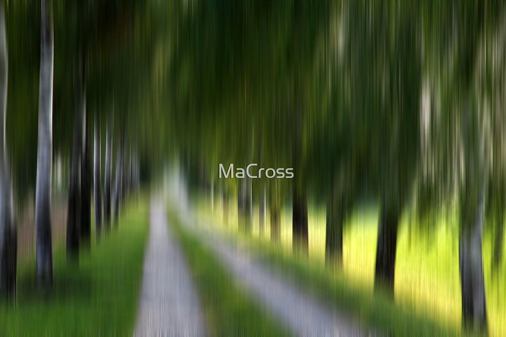 My Way II by Martina Cross