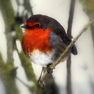Robin  by larry flewers