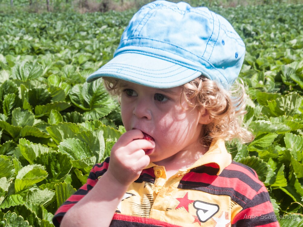 Otis in the strawberry patch by Anne Scantlebury