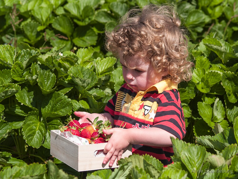 Otis in the strawberry patch 2 by Anne Scantlebury