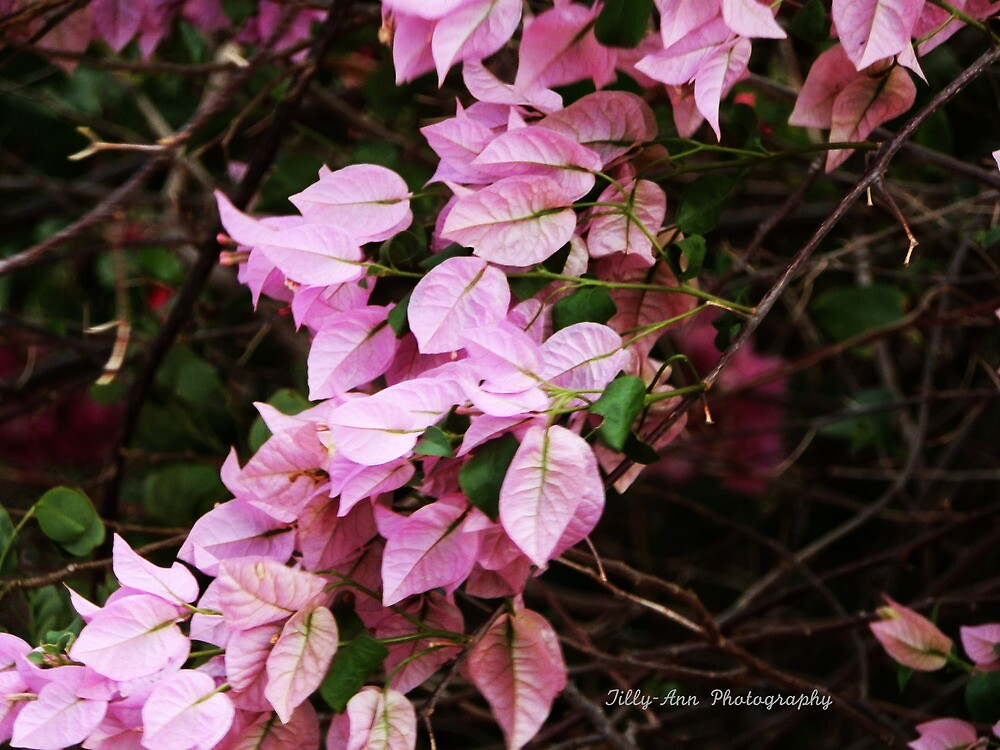 Pink Leaves by lisaann1991